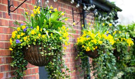 Create Beautiful Flower Displays in Your Home or Garden with Hanging Baskets
