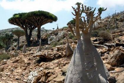 7 Pulau Paling Misterius Dan Aneh Di Dunia