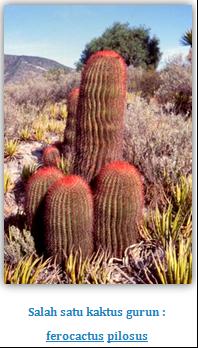 Ciri Khusus Kaktus : khusus, kaktus, Cerdas:, Khusus, Kaktus