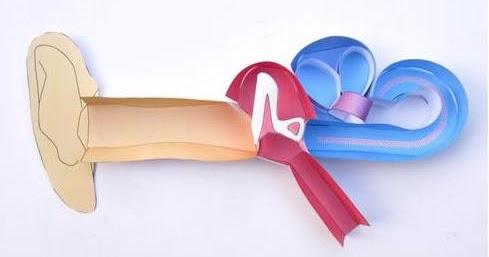 Design Inspiration: Origami Organelles!