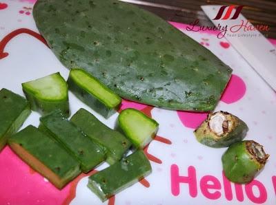 cooking kin yan agrotech cactus