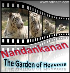 Nandankanan Park zoo