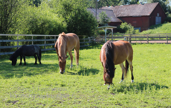 fallkulla kotieläintila malmi helsinki hevonen