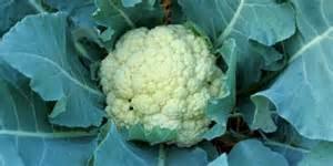 sayuran bermanfaat