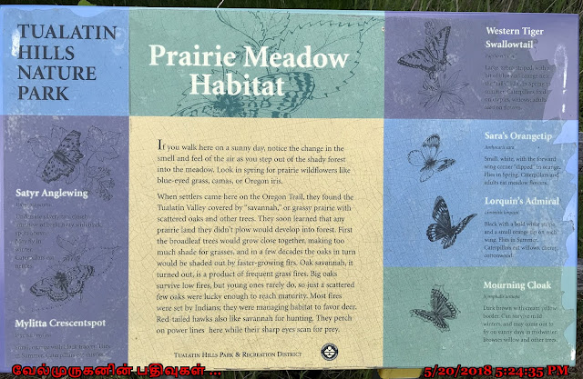 Prairie Meadow Habitat Beaverton