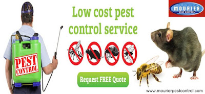 Pest Control for Home Protects Your Place with a Durable Effect and Friendliness