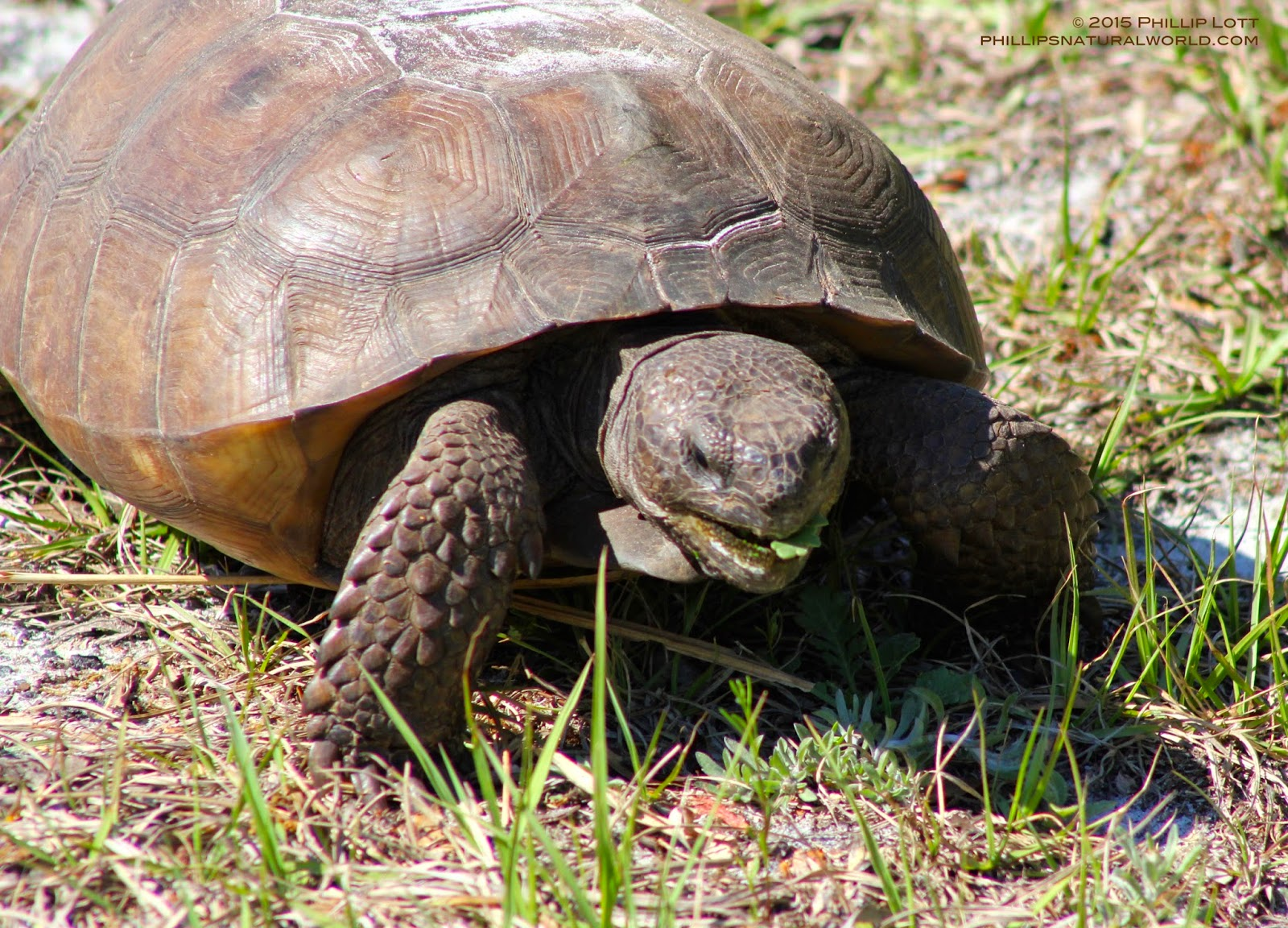 A Hawk, A Tortoise, and an Ili pika | Phillip's Natural