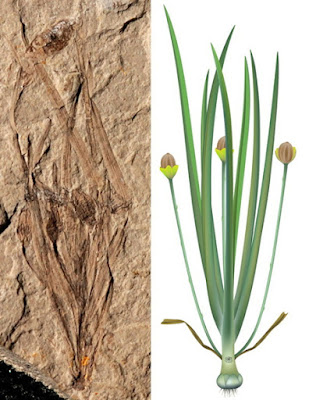 Fossil of world's earliest herbaceous angiosperm plant found in China
