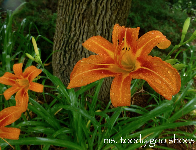 Lovely Lilies by Ms. Toody Goo Shoes