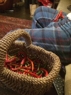 Sewing chillies
