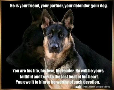 pet loyalty
