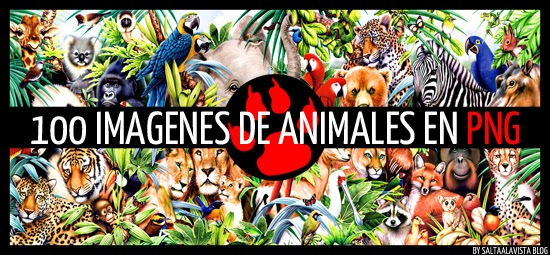 Pack con 100 Imágenes HD de Animales en Formato PNG
