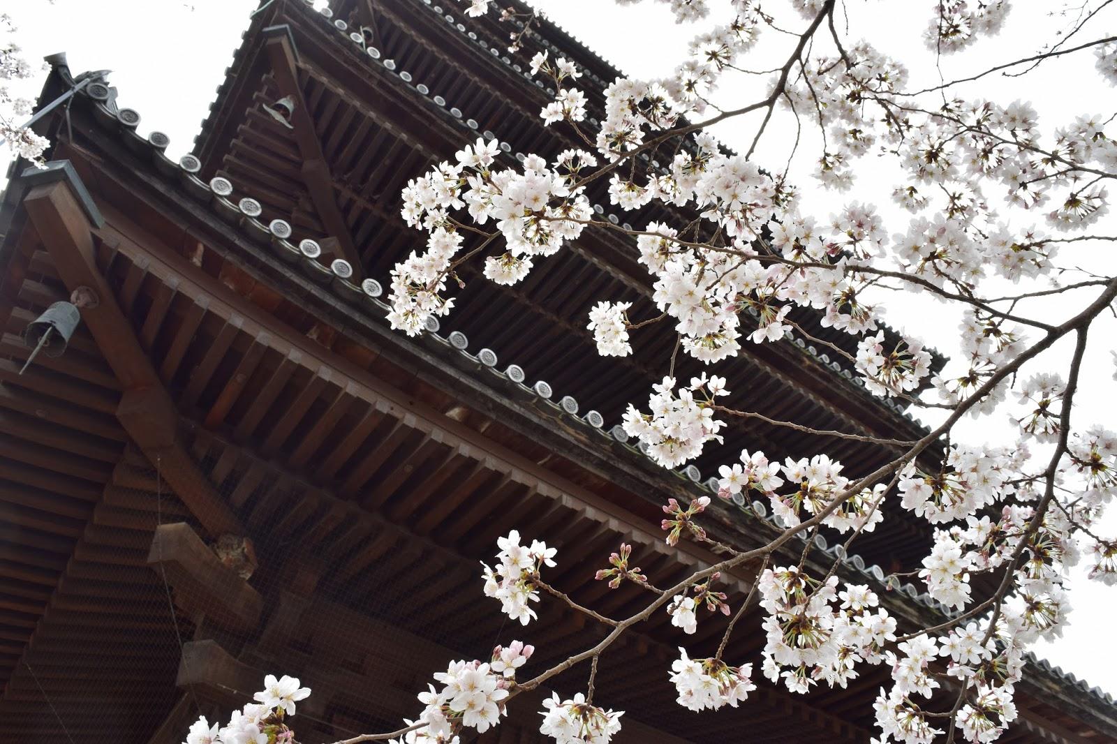 Toji sakura