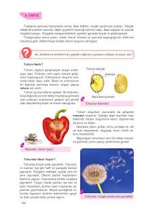 8. Sınıf Fen Bilimleri Ders Kitabı Cevapları Tutku Sayfa-159