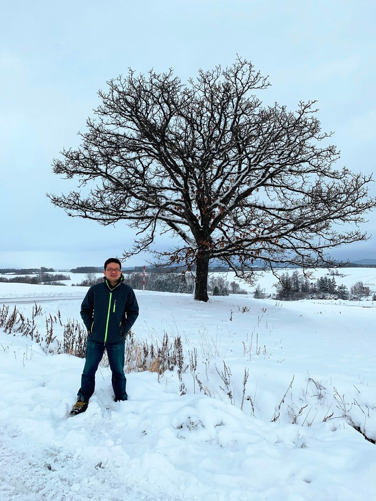 北海道七星之樹