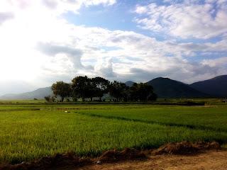 Campi di riso a Nha Trang