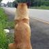 Muere el perrito que llevaba más de un año esperando a su familia en el mismo lugar  donde lo abandonaron.