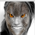 Animal Faces - Face Morphing for Android app free download
