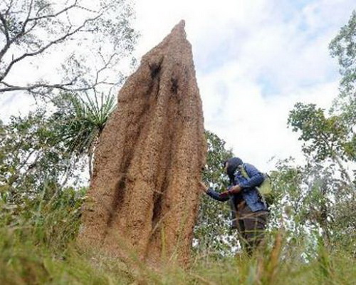 Tinuku Travel Wasur National Park watch Papuan kangaroos and Musamus gigantic termite mud house in largest wetland