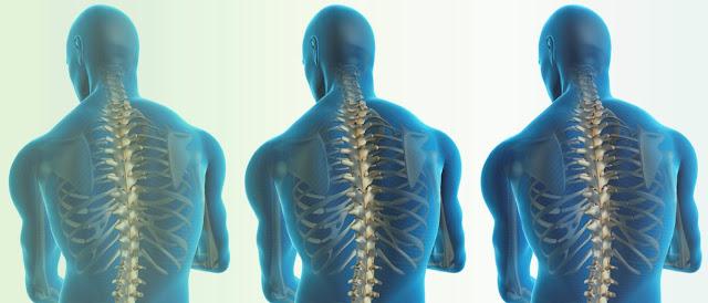 Medula espinal y biologia