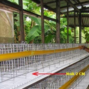 Kandang Baterai Ayam Petelur