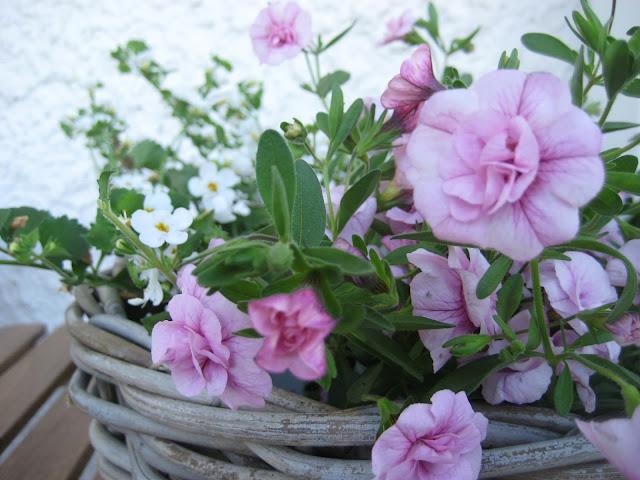 kukka, kori