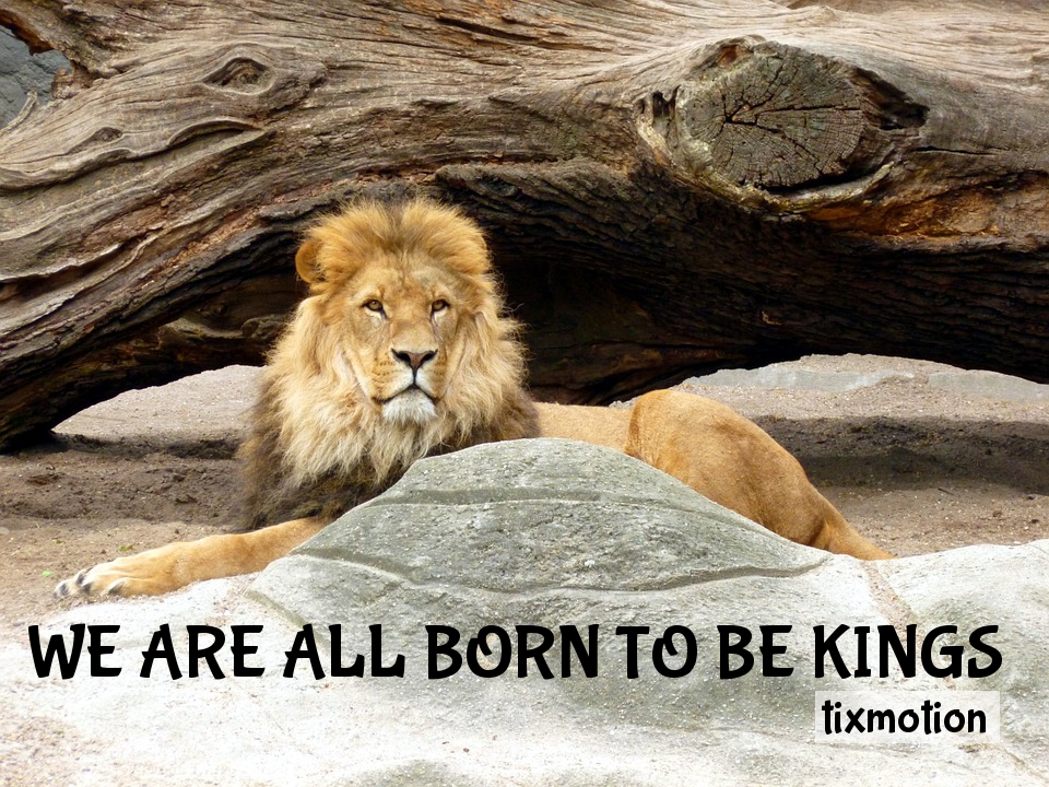 WE ARE ALL BORN TO BE KINGS Lion, Lions, Male, Lion's