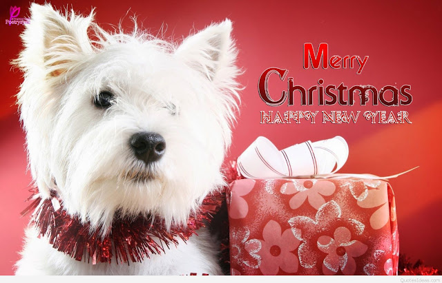 merry christmas funny wish greeting card picture