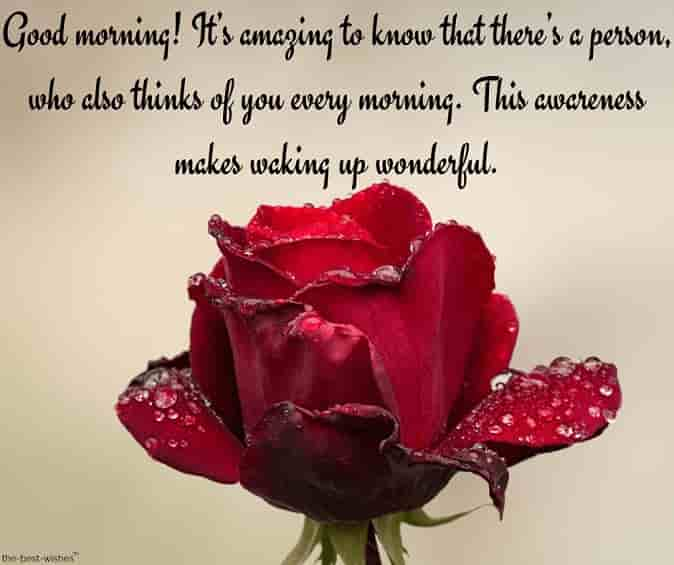 good morning text messages pictures with dew on red rose