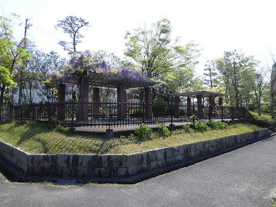 王仁公園の藤棚