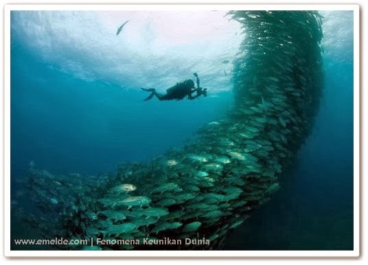 Serangkaian Ikan Membentuk Rnado SOFTWARE GAME FULL VERSION