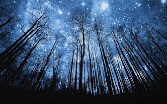 Starry Night Forest