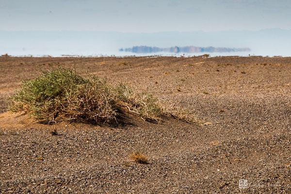 Unforgiving Gobi, the flora (Mongolia 15) | Chelin beyond ...