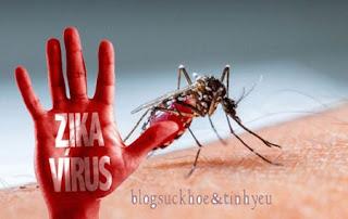 phòng chống virus zika