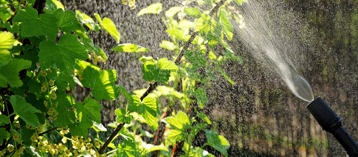 Neem oil insecticidal spray Atlanta