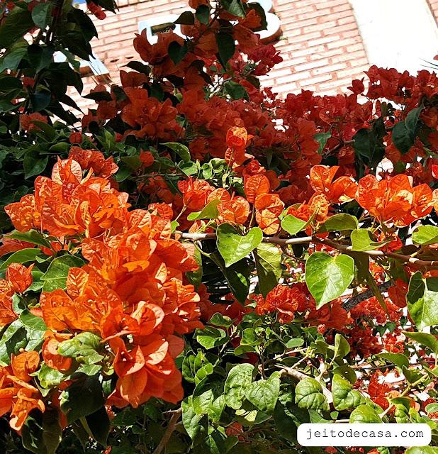 buganville- primavera-laranja