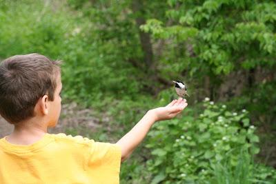 Chickadee feeding on William's hand ~ Royal Botanical Garden :: All Pretty Things