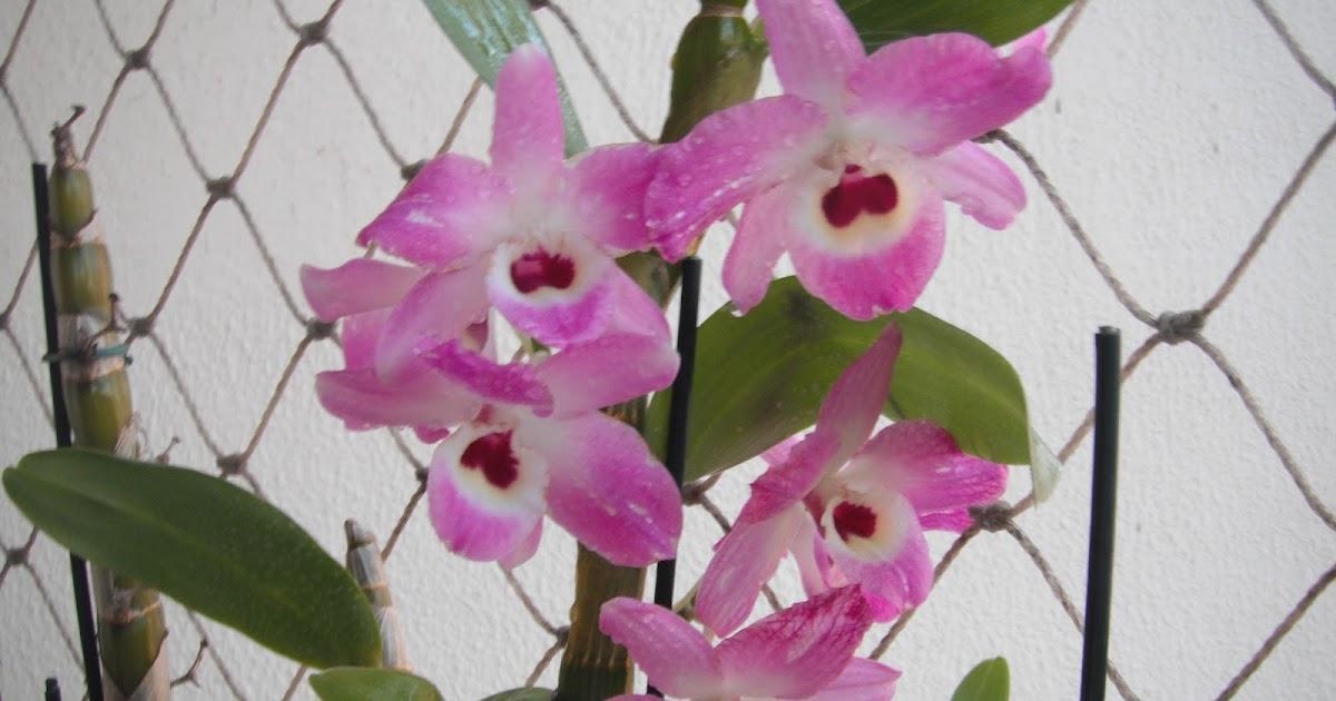 Blá Blá Blá Da Rô Reflita: Blá Blá Blá Da Rô: Orquídeas Em Promoção