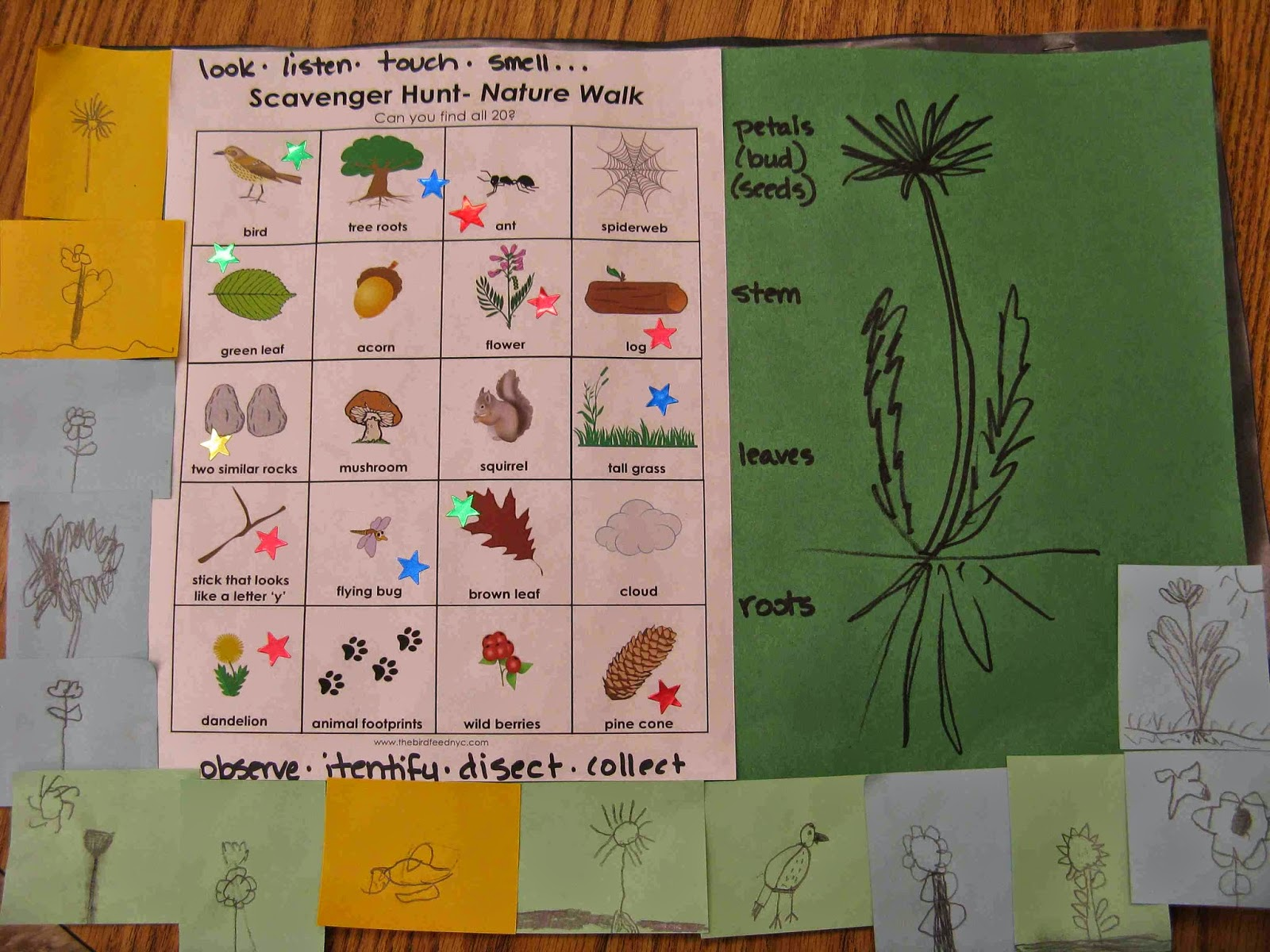 Create Art With Mrs P Nature Walk Scavenger Hunt And Sketches