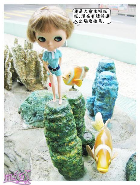 Blythe, 小布, B女, 大角咀, 海洋公園, 拍照