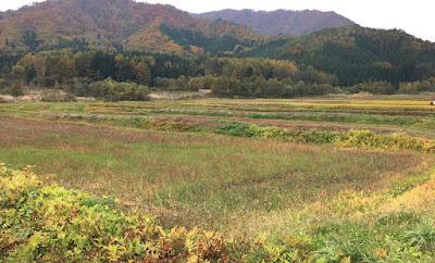 大内宿そばのそば畑