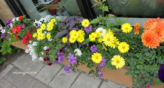 Planting The Prettiest Window Box In Town #containergarden #windowbox #annuals