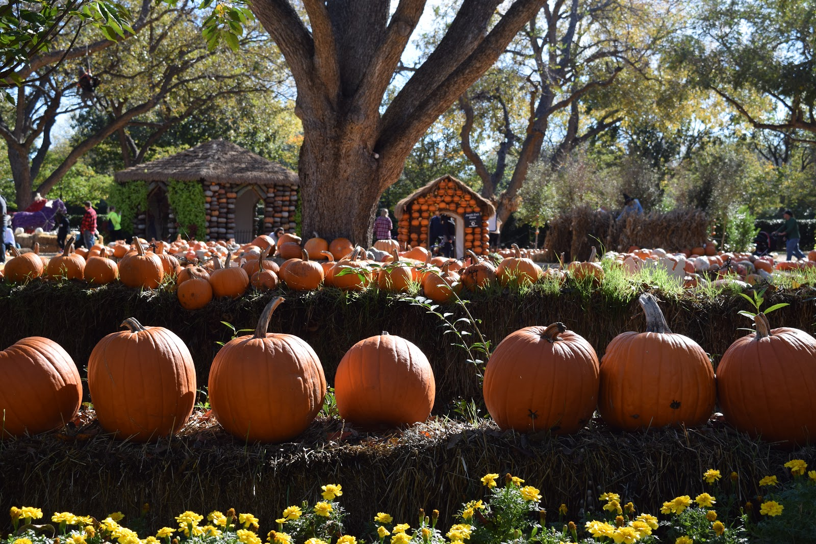 Travel for a Purpose: Autumn Colors at Dallas Arboretum Botanical Garden