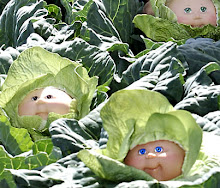 CUTE 'LIL CABBAGES ...