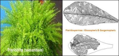 jenis-jenis tumbuhan pembentuk batubara