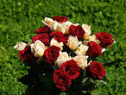 rose flowers wallpapers backgrounds tag