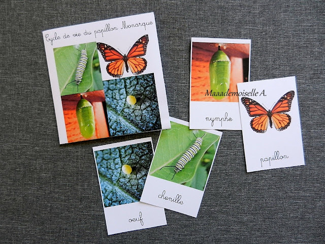 || Cartes de nomenclature : Papillons, cycle de vie