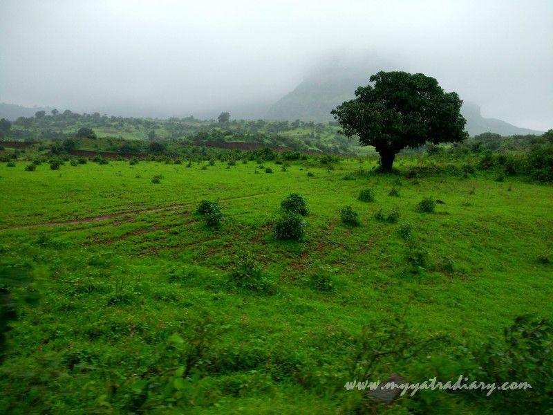 on the Trimbakeshwar -Ghoti road near Nashik, Maharashtra