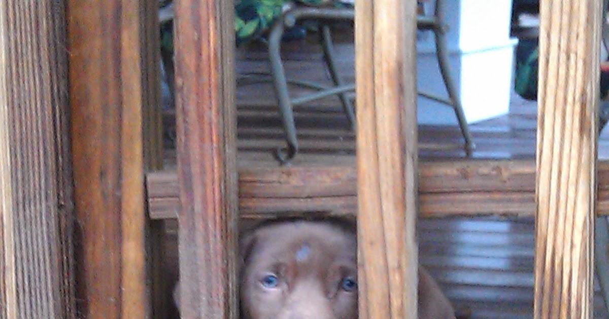 100+ Pets Craigslist Lincoln Nebraska – yasminroohi