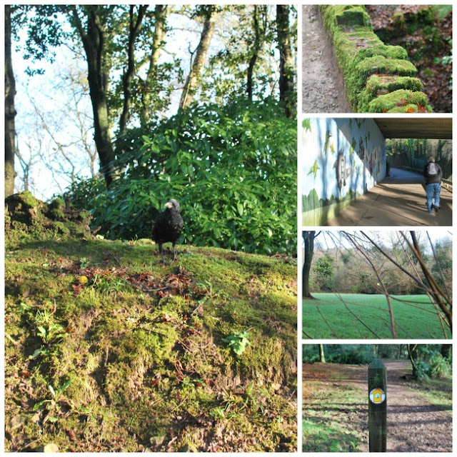 collage of a Raven, a mossy wall, an underpass, a golf flag and a way path marker